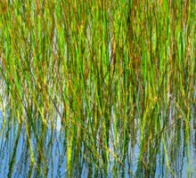 Reflection of Reeds - Abstract from Nature Sticker