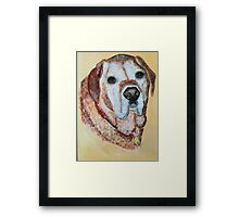 Golden Labrador Retriever Framed Print