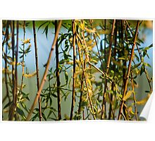 Willow branches with flowers Poster