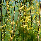 Willow branches with flowers by Dfilyagin
