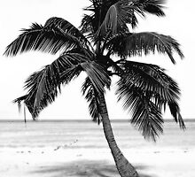Jamaican Pallm in Black and White by Glennis  Siverson