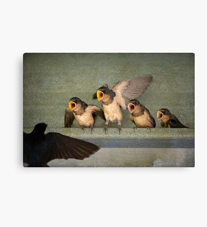 Singing for our supper Canvas Print