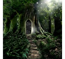 Doorway to Lothlorien Photographic Print
