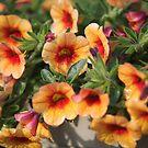 Orange Flowers by Karl R. Martin