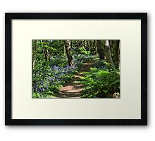 Bluebell Woods Framed Print