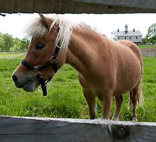 I Want a Pony... by Yvonne Roberts