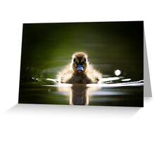 The Inquisitive Duckling Greeting Card
