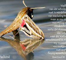 Vaalkind by Rina Greeff