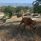 a doggie dog walker. by Amanda Huggins