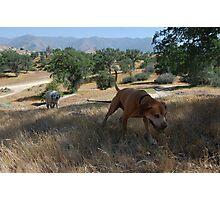 a doggie dog walker. Photographic Print