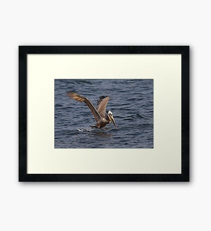 I Can Fly, I Can Fly ! Framed Print