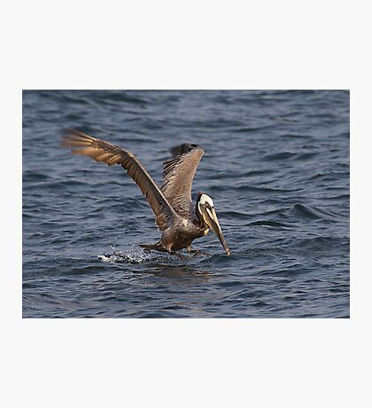 I Can Fly, I Can Fly ! Photographic Print