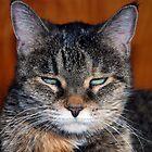 Feline Beauty by jodi payne
