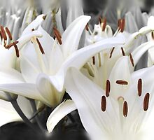 White lilies (Honoring all mothers) (Happy Mother's day May 8th) by Poete100