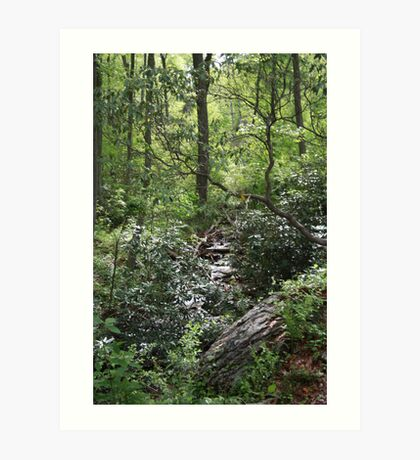 Cascade At Cold Springs Cabin Art Print