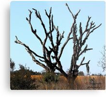 prairie trees Metal Print