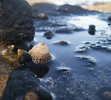 Rock Pools by JessicaJade