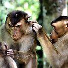 Mutual Grooming. Short-tailed Macaques, Borneo  by Carole-Anne