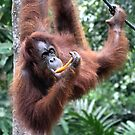 Just Hanging Around, Young Female Orangutan, Borneo  by Carole-Anne