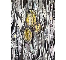 Tulip.Hand draw  ink and pen, Watercolor, on textured paper Photographic Print