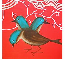 Blue birds in the Red Photographic Print
