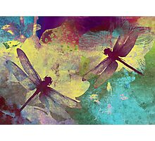 Painting Dragonflies & Orchids. Photographic Print