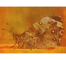 Spread your wings and be a Butterfly... Photographic Print
