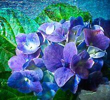 Pink & Blue Hydrangea by BoB Davis