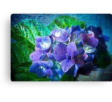 Pink & Blue Hydrangea Canvas Print
