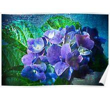 Pink & Blue Hydrangea Poster