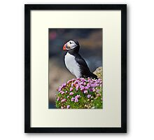 Puffin therapy Framed Print