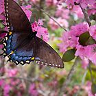 Butterly and Azaleas by Karen Kaleta