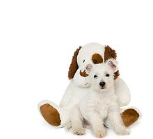 Westie Pup and Teddy Bear by Natalie Kinnear