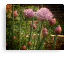 Chives - Through the Viewfinder Canvas Print