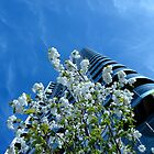 Sky, Scraper, Blossom - Spring @ Media City by electrocub