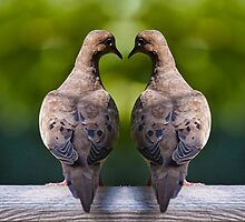 Dove birds, an image of two Mourning Doves by Randall Nyhof