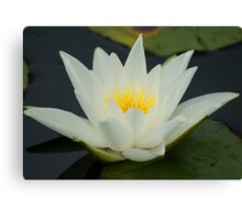 Lotus ~ Sign Of Peace And Enlightenment Canvas Print