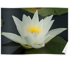 Lotus ~ Sign Of Peace And Enlightenment Poster