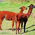Baby Llamas at the Farm by Daidalos
