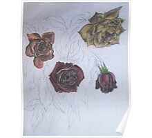 Roses (study) Poster