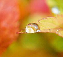 Rain Drops by Robert  Miner