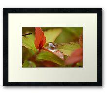 Droplet Craddle Framed Print