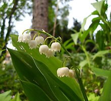 Lily of the valley by Heidi Mooney-Hill