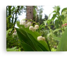 Lily of the valley Metal Print