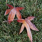 Fallen Red Leaves on the Lawn in a Morning Frost by Randall Nyhof