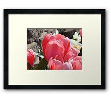 Pink Tulip Flowers Floral Garden art Baslee Troutman Framed Print