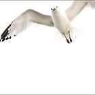 Flying Gull, White on White No 1 by Randall Nyhof