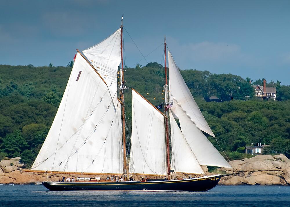 Bluenose II Sail into Gloucester Harbor by Steve Borichevsky
