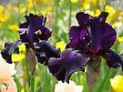 Floral art Purple Iris Flowers Garden Irises Baslee Troutman by BasleeArtPrints