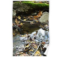 Forest floor Poster